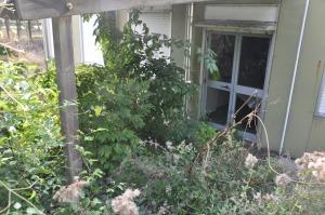 Un'altra entrata: vetri infranti e invasione di piante