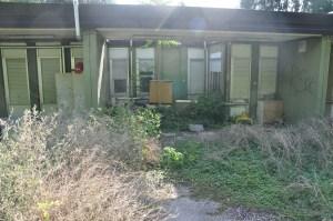 Di nuovo l'asilo invaso dalle piante